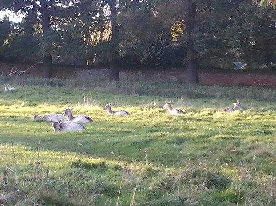 Wollaton Hall and Park: Deer