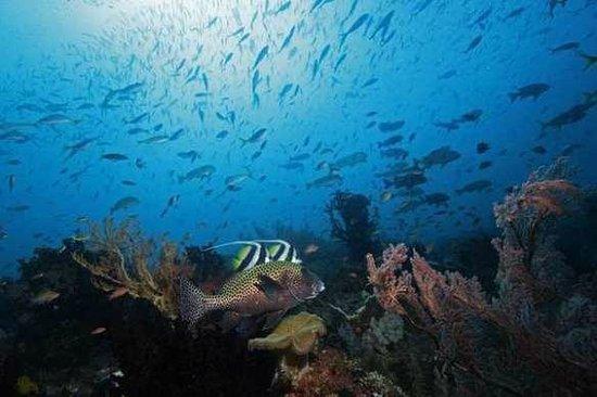 Raja Ampat Islands: keindahan bawah laut Raja Ampat