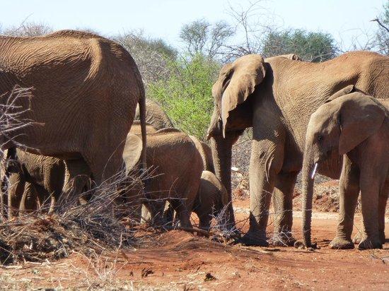 Madikwe Safari Lodge: Love the elephants!