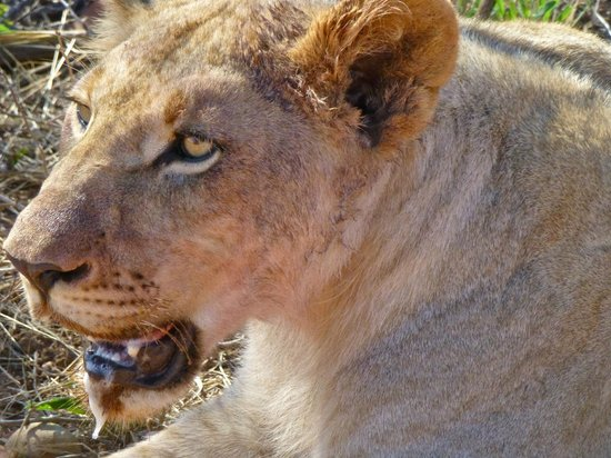 "Madikwe Safari Lodge : ""I'm full now"""