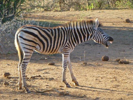 Madikwe Safari Lodge : Ah-choo!