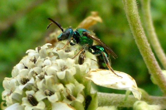 Boyd Hill Nature Preserve : Insects provide opportunities for macro photography.
