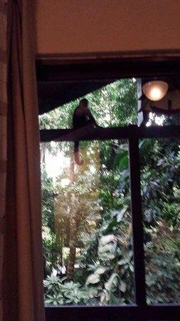 Byblos Resort & Casino: Monkeys on our balcony!