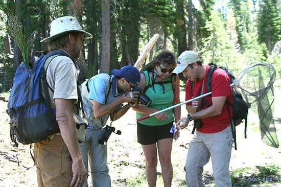 Tahoe Institute for Natural Science: Examining butterflies near Barker Pass