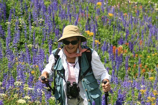 Tahoe Institute for Natural Science: Full emersion wildflower viewing near Carson Pass