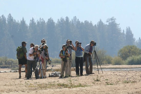 Tahoe Institute for Natural Science: Birding at the Upper Truckee River Delta