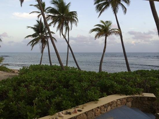 The Palms at Pelican Cove: from the patio