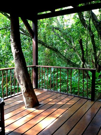 Deck and trees outside of our lovely room on the bottom floor of Pousada Anjali.
