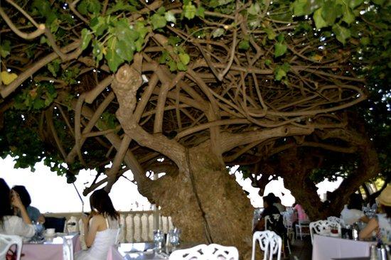 The New Otani Kaimana Beach Hotel: Hau Tree open air restaurant in hotel lobby