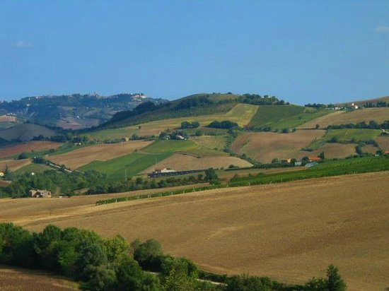 Lavanda Blu Agriturismo: A view of the beautiful hills from the Guesthouse
