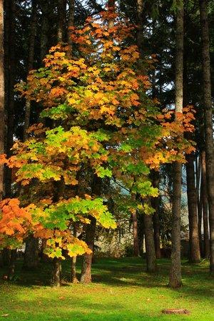 Row River Trail : Dorena Lake Fall Colors:  November 2013