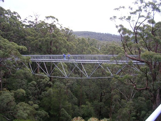 Willowleigh B&B: Valley of the Giants' Tree Top Walk