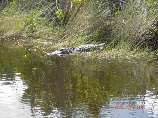 Everglades City Airboat Tours: Go ahead, come closer!   LOL