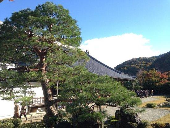 Tenryuji Temple: 好天氣,好景色。