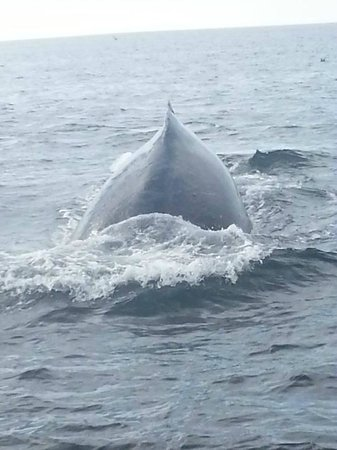 Sanctuary Cruises: Humpback whale