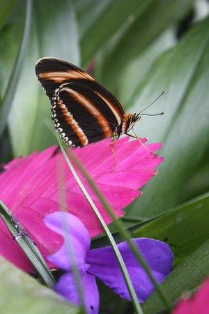 Jardin des Papillons: Красиво!