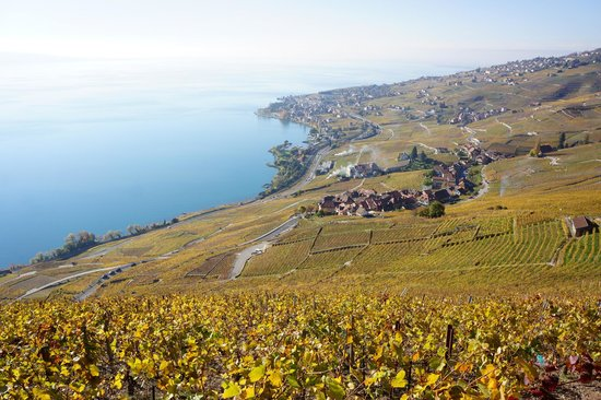 CGN: Lavaux-Epsses-Cully: une balade entre vigne et lac