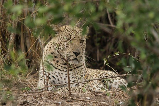 Singita Sweni Lodge : Amazing wildlife