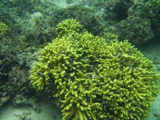 Ocean Terrace Restaurant: Underwater marine at Bedarra