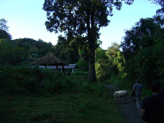 Vivanta by Taj Madikeri: rain forest walk