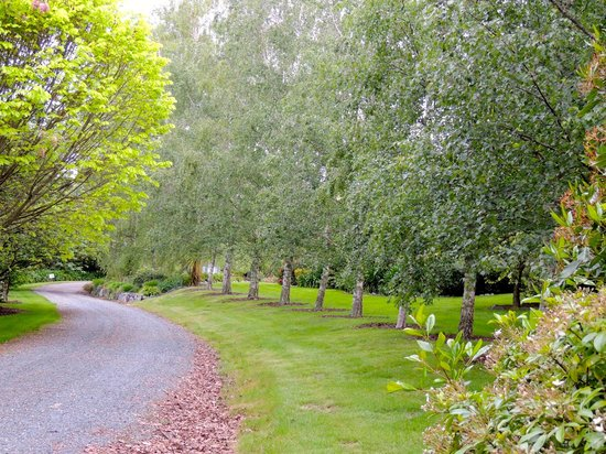 Cat's Pjamas Bed and Breakfast: Beautiful tree lined driveway