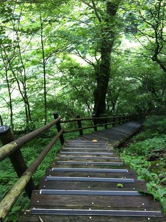 Mitaki Canyon: 整備された道