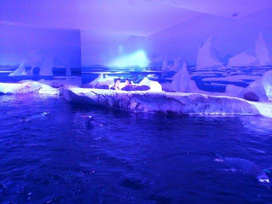 penguins - Picture of Sea Life London Aquarium, London - TripAdvisor