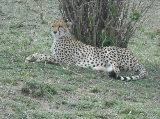 Julius Thuvi Safaris: Just at the side of the road