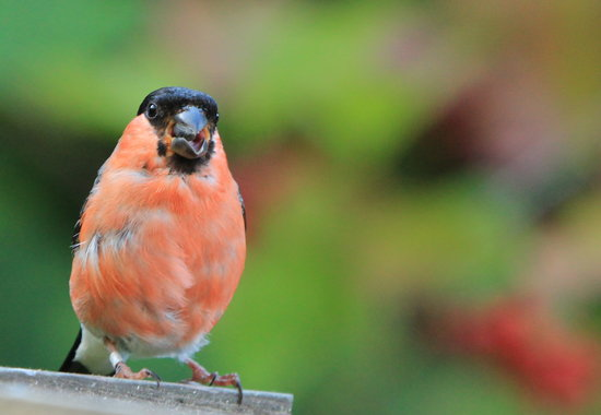 Eastshaw Guest House: Bullfinch at St Cuthberts Cottage