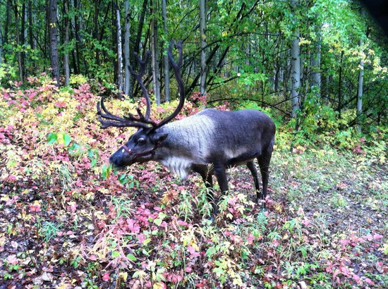 Running Reindeer Ranch : In the forest