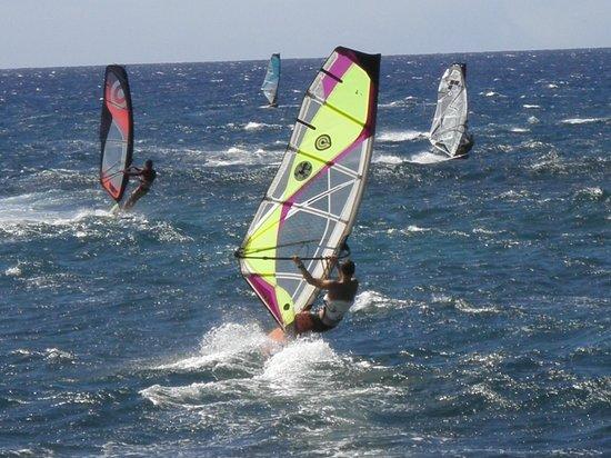 Paia, HI: windsufers