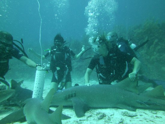 Neptune's Cove: Giving shark a back massage!