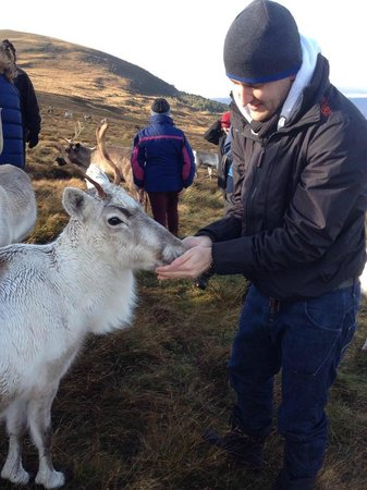 Hilton Coylumbridge Hotel : Feeding the Reindeer