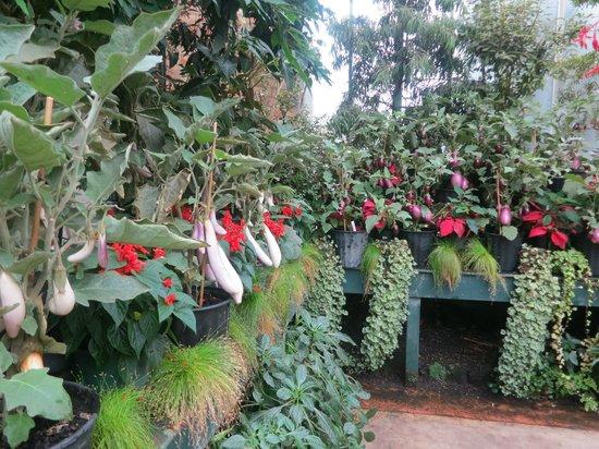 Le parc Albert : Для садоводов