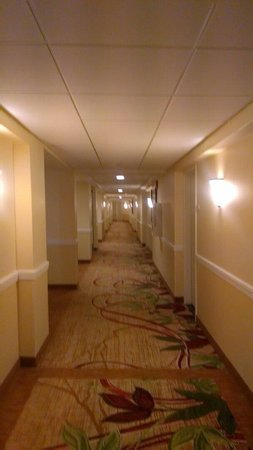 West Palm Beach Marriott: The hall way