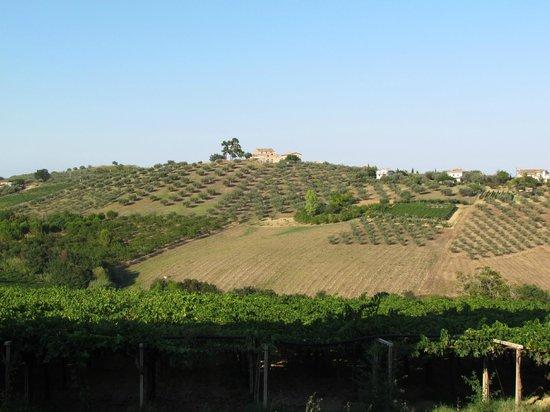 Agriturismo Torre Mannella: The vineyards