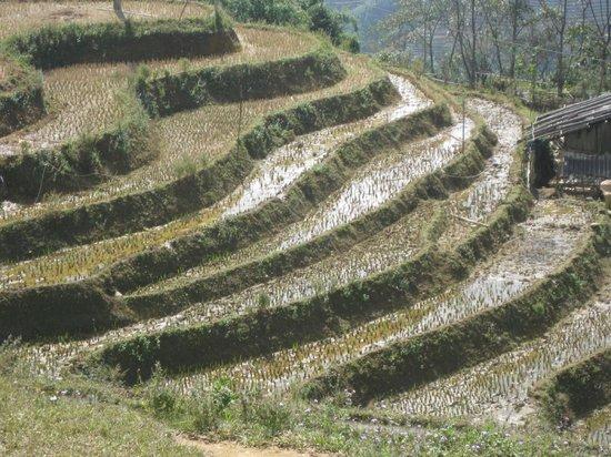 Adventure Indochina Travel: Trekking the rice terraces near SaPa