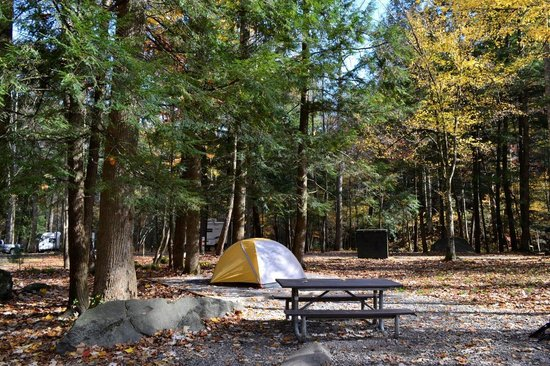 Elkmont Campground: Campsite D11 NOV 2013