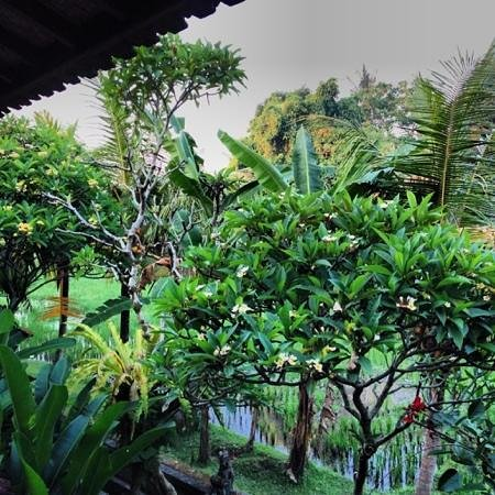 Jati Home Stay: the vieww from our terrace
