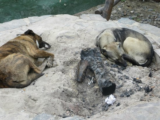 Jungle Monkey Backpackers: let sleeping dogs lie (in the barbeque pit)