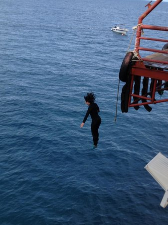 Seaventures Dive Rig: Jumping off the escalator!