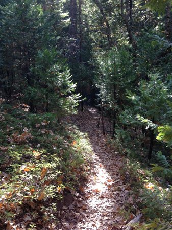 Arnold Rim Trail: hard to tell, but this is a steep section of trail
