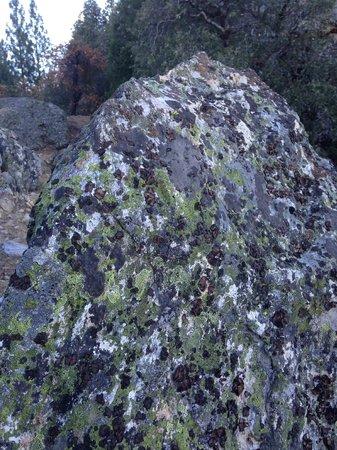 Arnold Rim Trail: lichen
