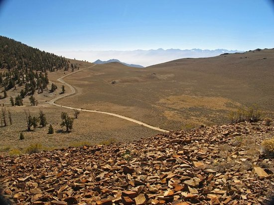 Ancient Bristlecone Forest: The road.  The Owens Valley was windy and dusty that day.