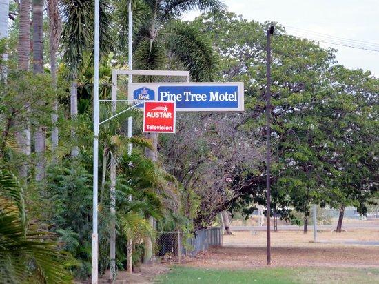 Pine Tree Motel