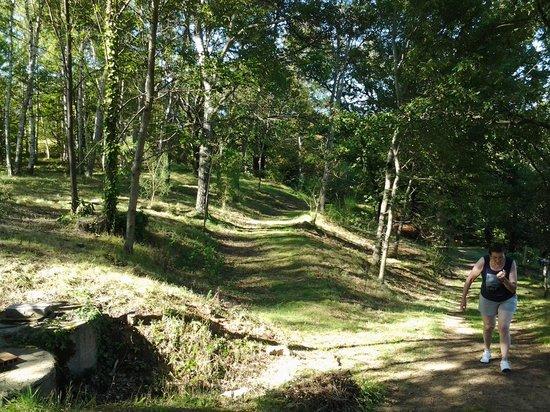 Arc-en-Ciel: bos waar je kan vertoeven in de achtertuin