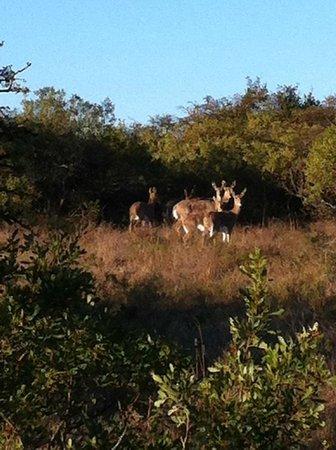 Burlington Game Farm: Wildlife