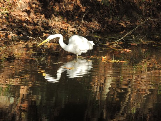 Royal Dunes Resort: gorgeous egrets in lagoon