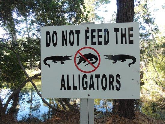 Royal Dunes Resort: fun to see alligators