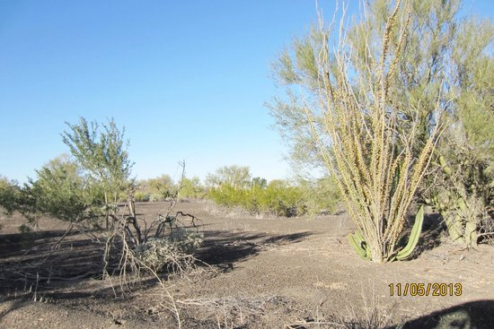 Sierra del Pinacate National Reserve : sites along the way
